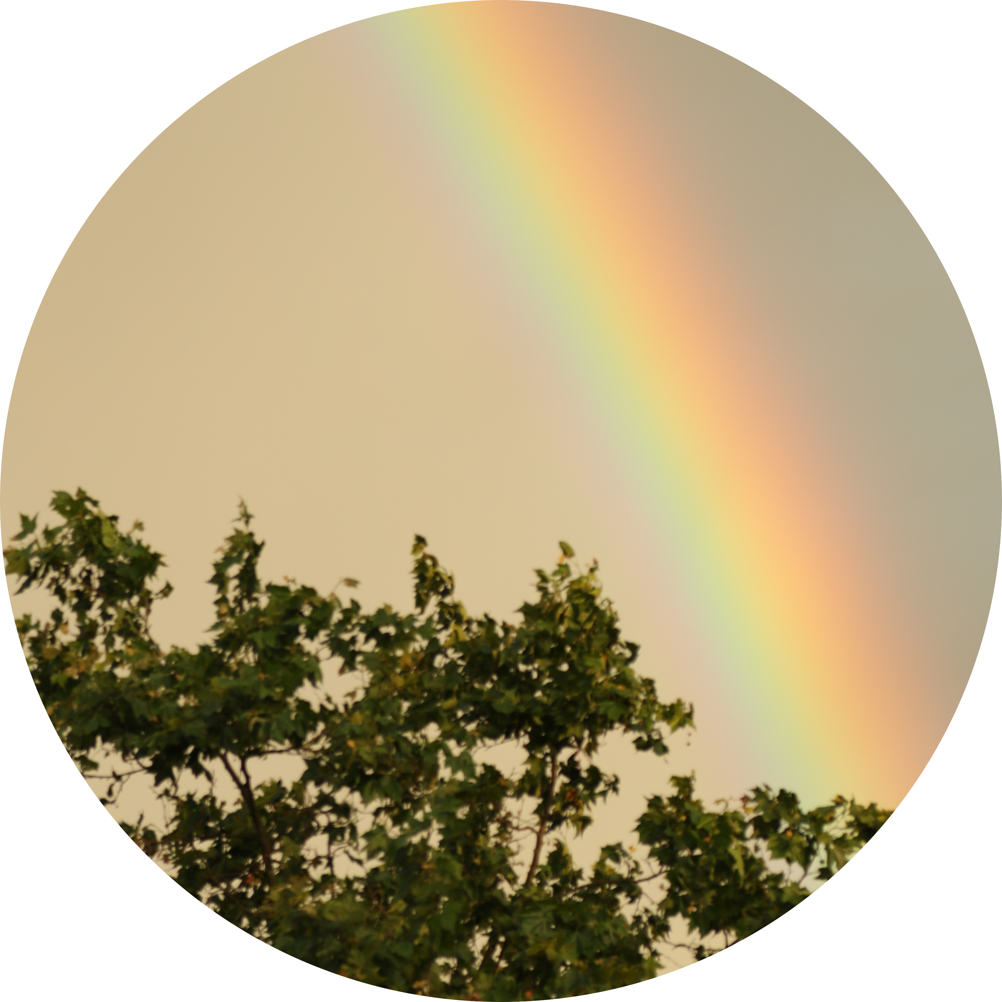 Image of a rainbow behind trees.